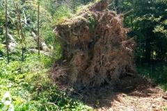 Tree Removal-Nashville, Franklin, Brentwood, Green Hills, Forest Hills