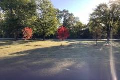 Tree Service-Nashville, Brentwood, Franklin, Green Hills
